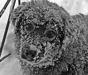 Бедная собачка на морозе