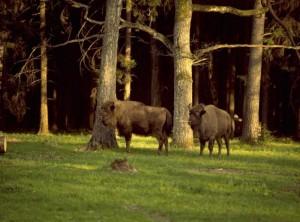 Беловежский народный парк